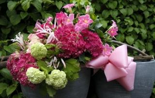 Wolter Strijker zomerbloemen
